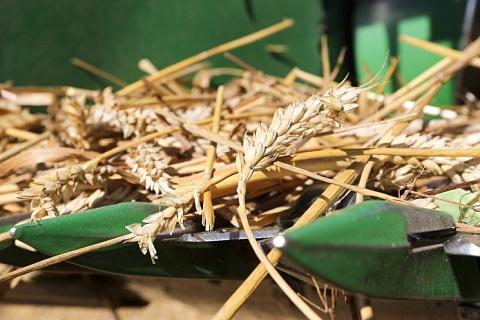 Снижение прогнозов урожая поддерживает цены на пшеницу