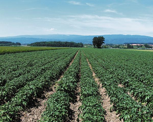 «АФГ Националь» приобрел производственный комплекс для выращивания картофеля в Ростовской области