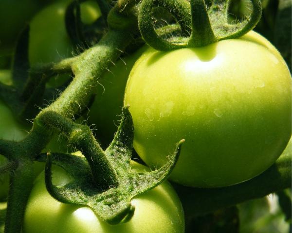 Компания «Овощи Черноземья» построит тепличный комплекс вЛипецкой области