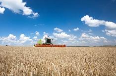 Регионы Сибири могут не успеть убрать зерно