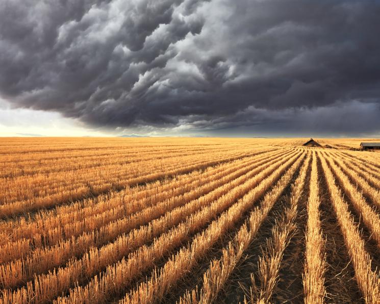 Агропром 2017: Будет ли рост? Первые прогнозы итогов года