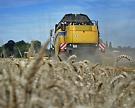 Сбор зерна достиг 80,7 млн тонн, пшеницы – 57,5 млн тонн