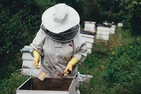 Алексей Гордеев: 40 тысяч пчелосемей погибли от пестицидов
