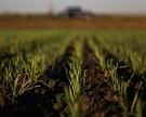 Убыток агроактивов АФК «Система» вырос на треть