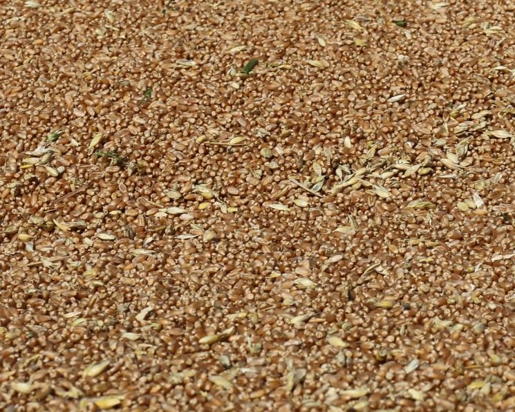 Росстат повысил урожай зерна до135,4 млн тонн