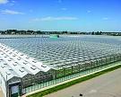 Тепличный эксперимент: голландские технологии вСибири