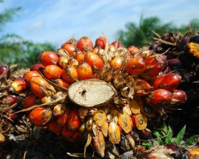 «Пальма» будет сакцизом?