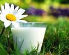 Валовый надой молока вырос на 2,1%