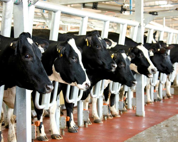 В2018 году предложение молока может превысить спрос