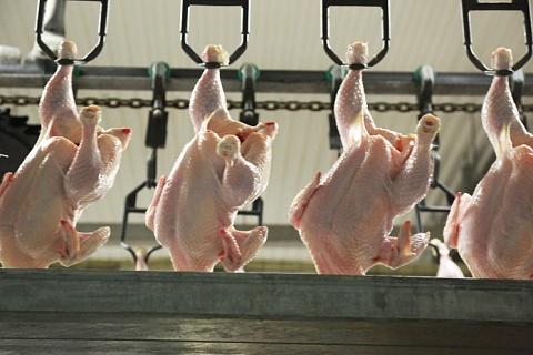 Крупнейшие птицефабрики произвели 4,64 млн тонн мяса бройлера
