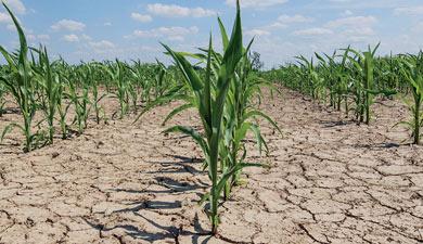 Итоги года: зерновой коллапс