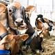 Экологически чистое молоко