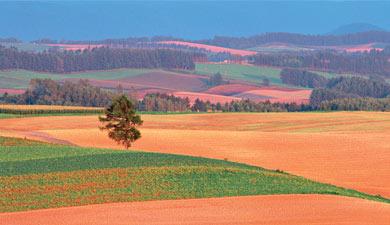 Делайте землю агробизнесом