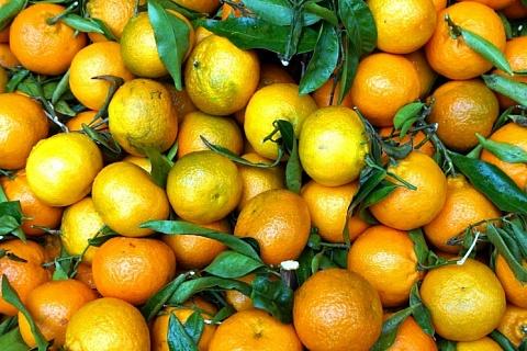 Импорт цитрусовых из Китая будет ограничен
