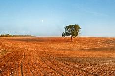 «Мираторг» покупает землю у чешского агрохолдинга