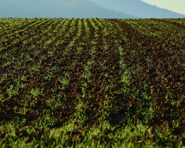 Лишь 0,2% сельхозугодий вРоссии сертифицированы как органические