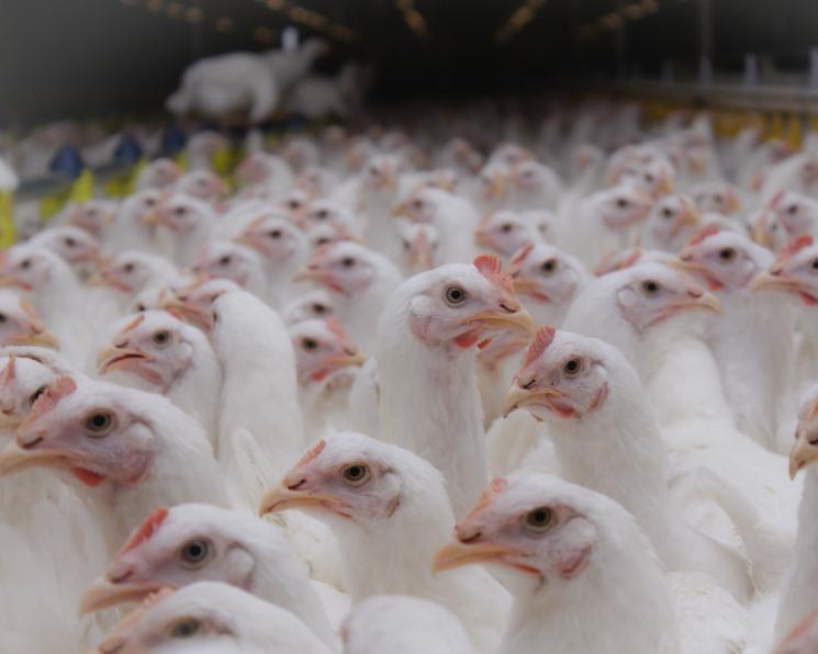 Событие года, Июль 2018: Начало конца «Белой птицы»?