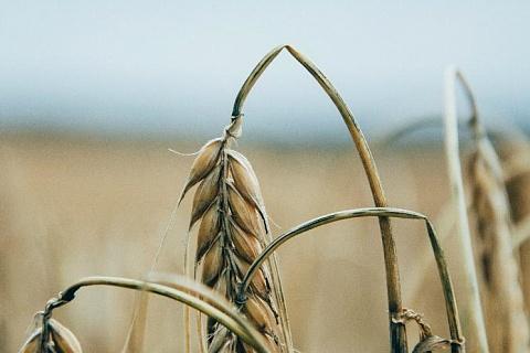 Ущерб аграриев отЧС приблизился к 13 млрд рублей