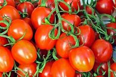 Импорт тепличных овощей может увеличиться
