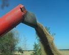 «Разгуляй» собрал 125 тыс. т озимой пшеницы