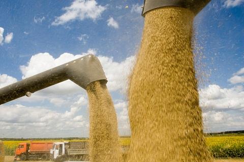 Россия увеличивает экспорт зерна на фоне снижения курса рубля