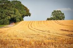 Минсельхоз США вновь повысил прогноз урожая пшеницы в России