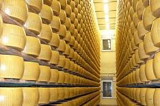 Сырный кластер в Подмосковье может увеличиться вдвое