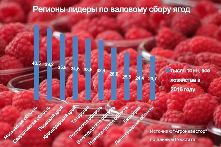 Московская область собрала больше всего ягод