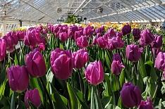 Польская JMP Flowers построит цветочные теплицы в России