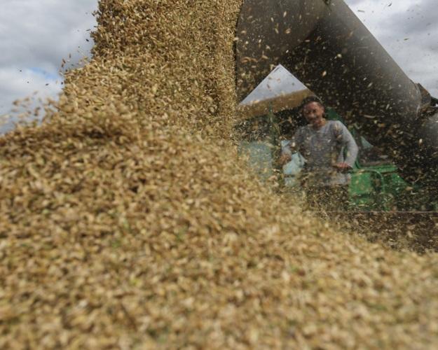 Вэтом году рост агросектора замедлится