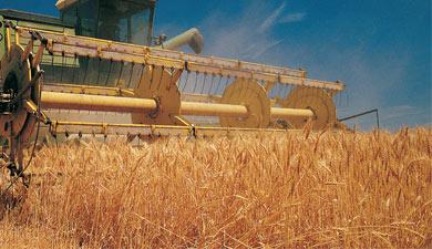 Урожай зерна— 2012 будет 94 млн т