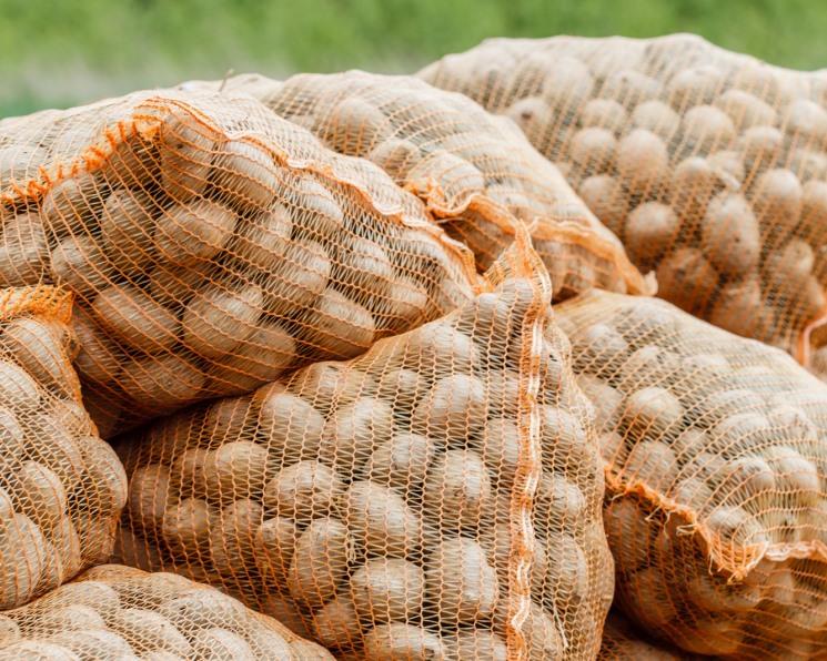 Селекция для всех. Какую выгоду получат аграрии отсоздания регионального центра семеноводства