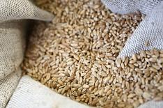 Экспорт пшеницы упал ниже прошлогоднего объема