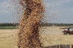 Минсельхоз озвучил объем урожая-2018