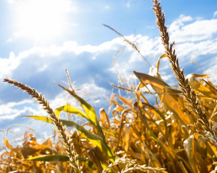 Зерновые под защитой. Анализ российского рынка СЗР