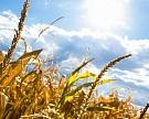 Посевы в ряде южных регионов оказались в зоне риска