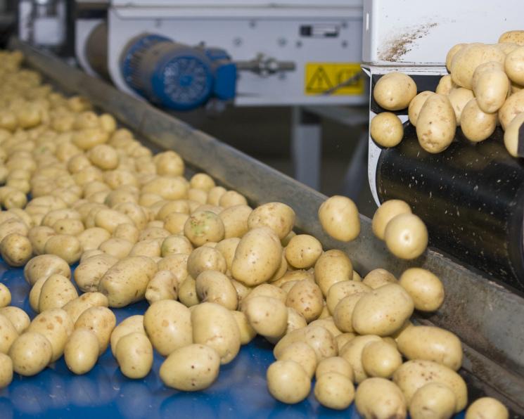 Картофель может подорожать