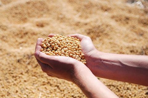 «Русагро» отправила первую партию сои в Китай