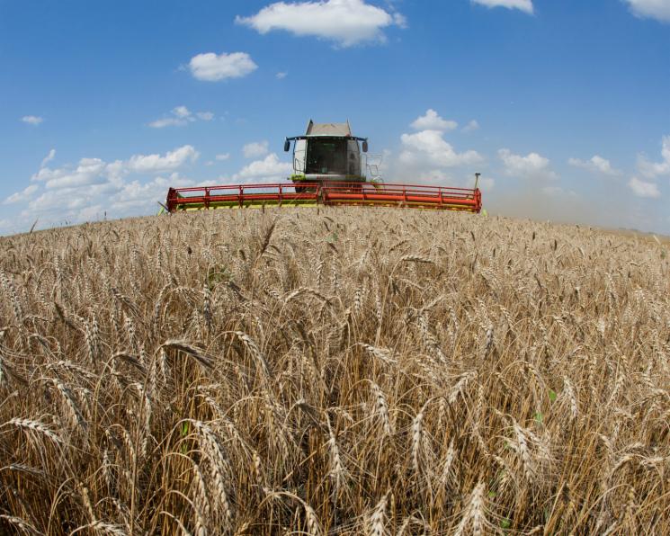 Управление фотосинтезом способно увеличить урожайность пшеницы
