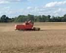 На 95% площадей собрано 107 млн т зерновых