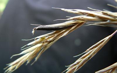 Война Египта соспорыньей впшенице: кто попал в«черный список»
