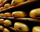 «Дамате» запустила сырное производство