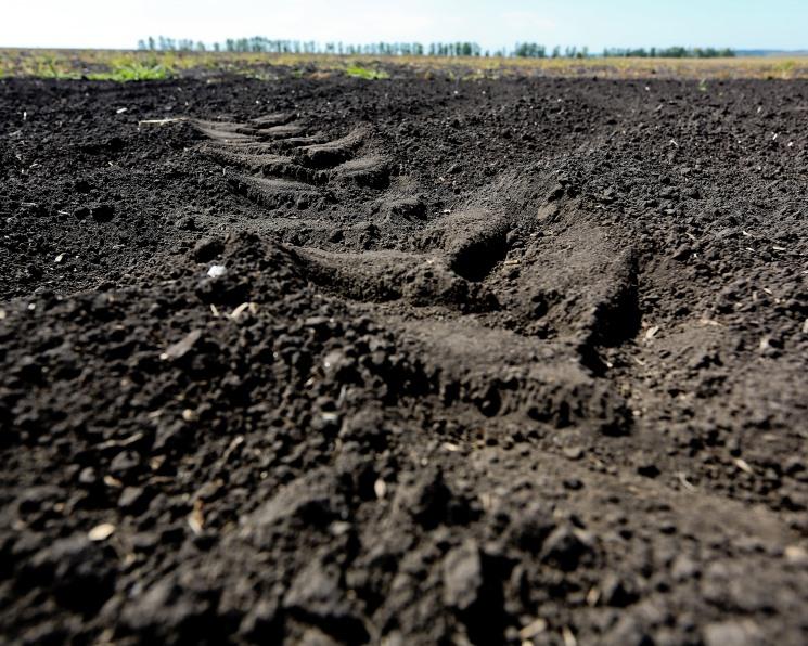 «Русагро» купила хозяйство в Тамбовской области