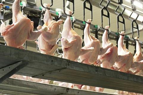 Приморье восстановит производство мяса птицы