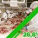 Производство говядины снижается