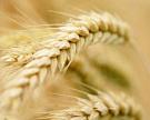 Зерновые интервенции начнутся 30сентября
