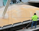 Россия вмае экспортировала 2,4 млн тонн зерна