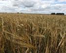 Сбор зерна преодолел 100-миллионный рубеж