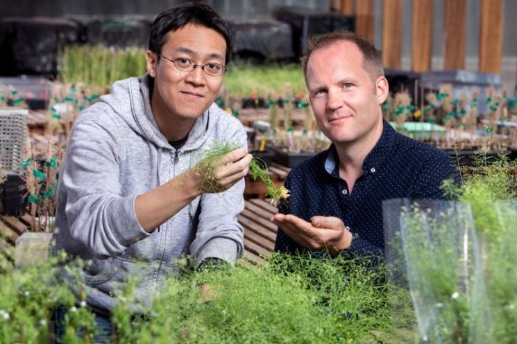 Найден новый ген устойчивости растений к жаре