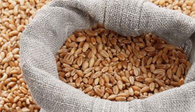 Для зерна определены новые цены